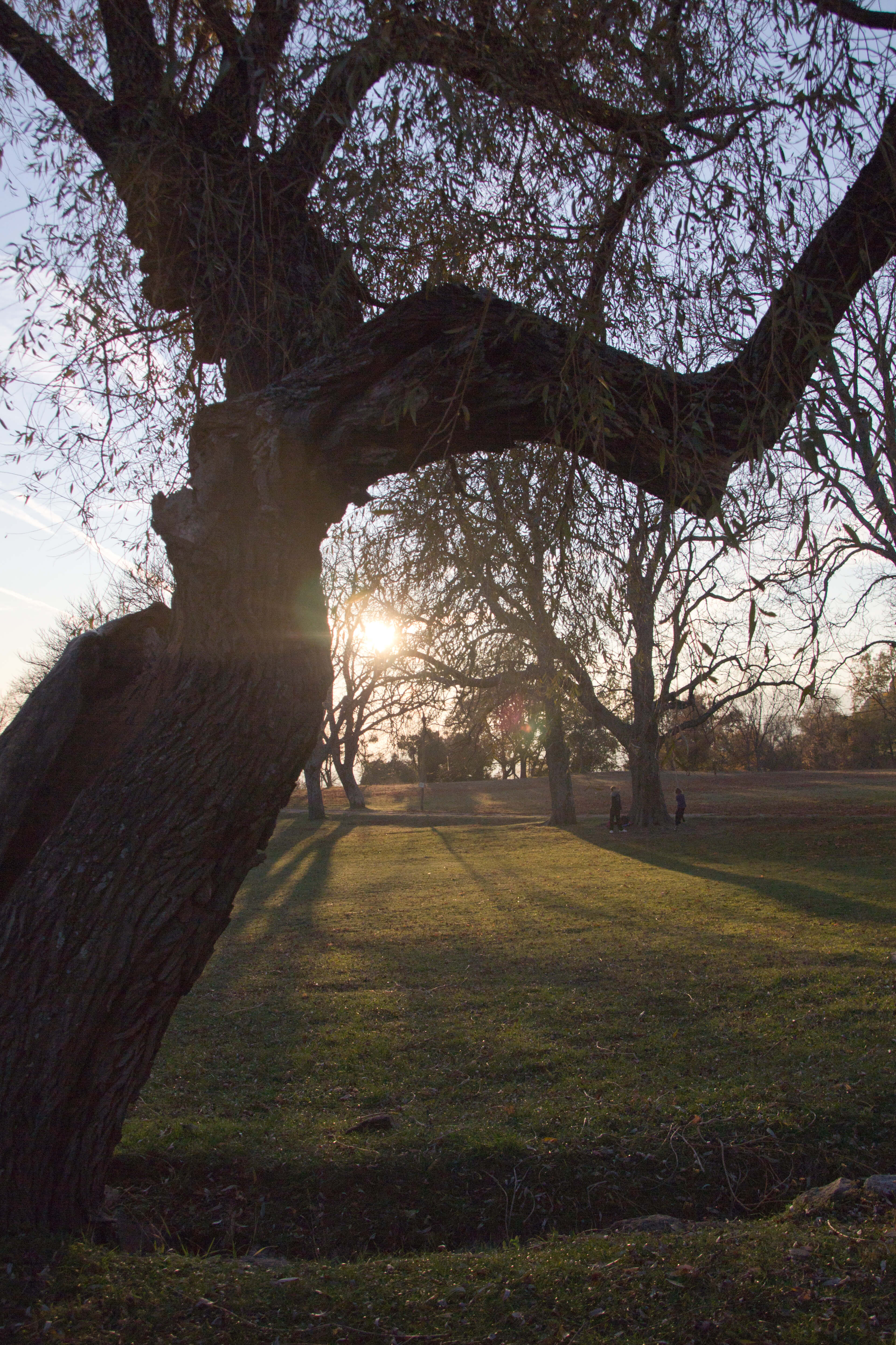 Lever de soleil sur le parc du domaine des Courmettes