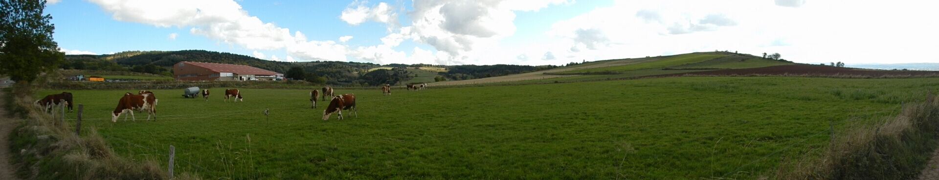 A chaque kilomètre ses vaches