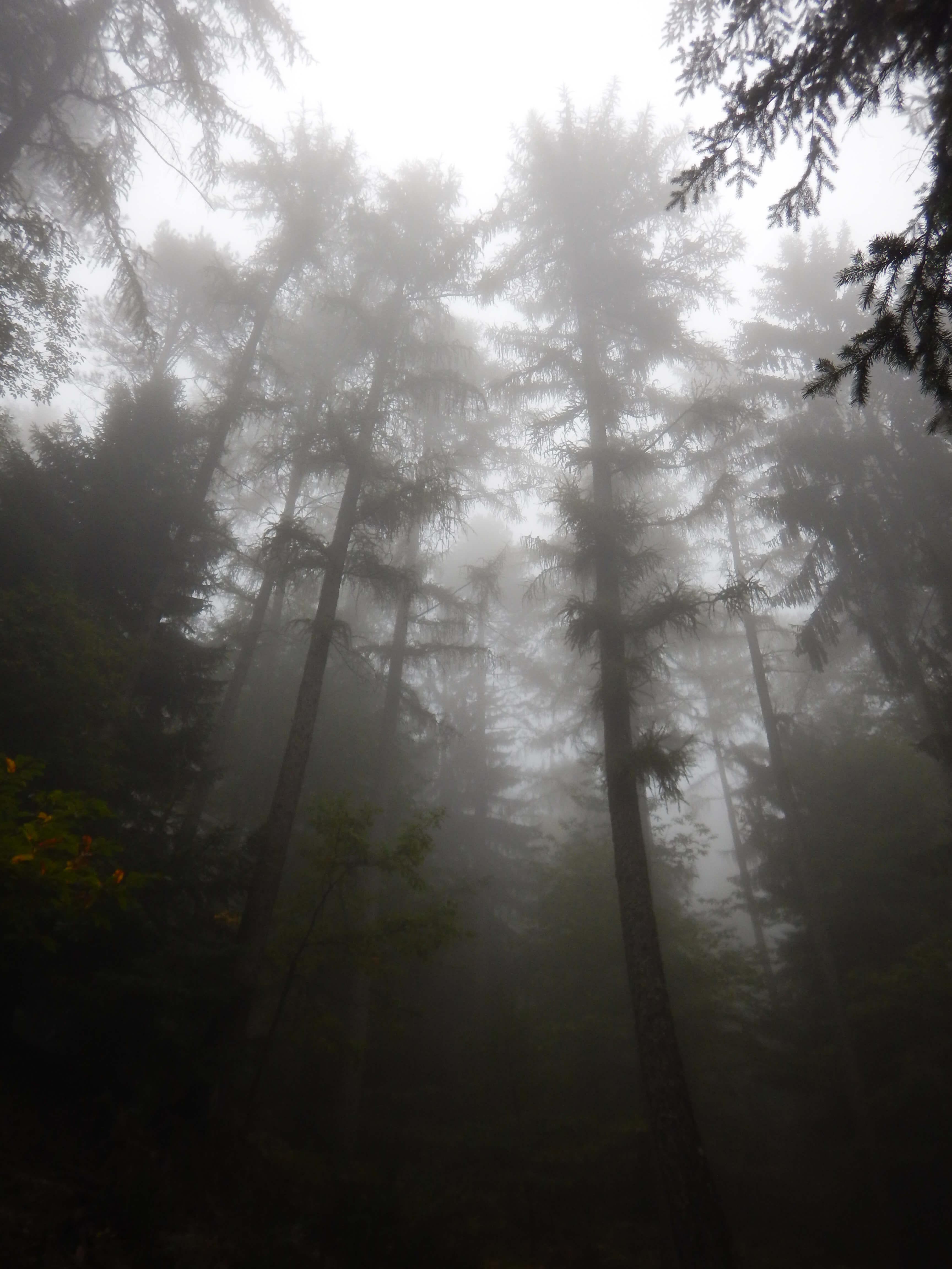 La brume a envahi les forêts des Cévennes