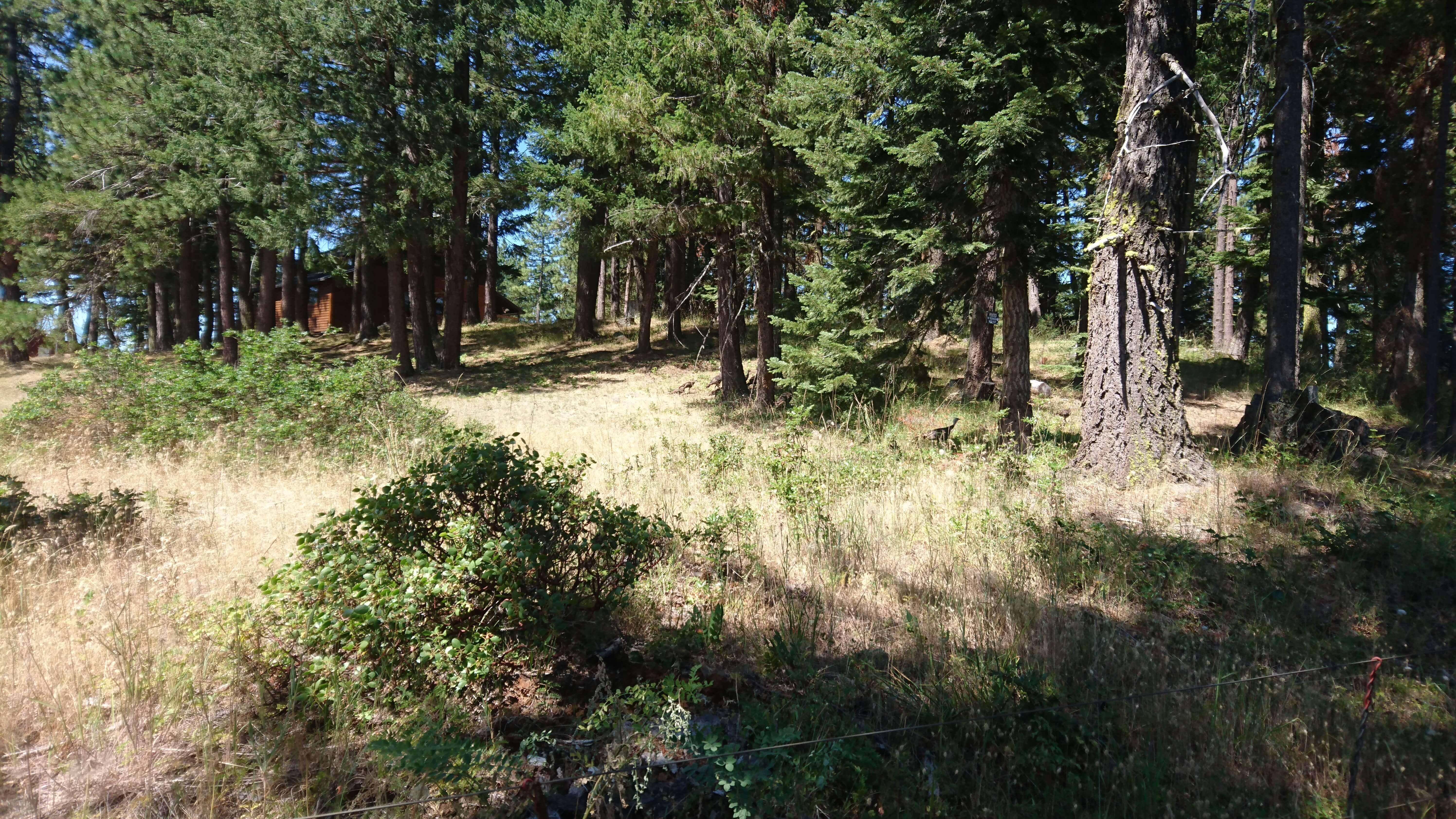 La forêt n'est pas très dense ici, et l'air est très chaud