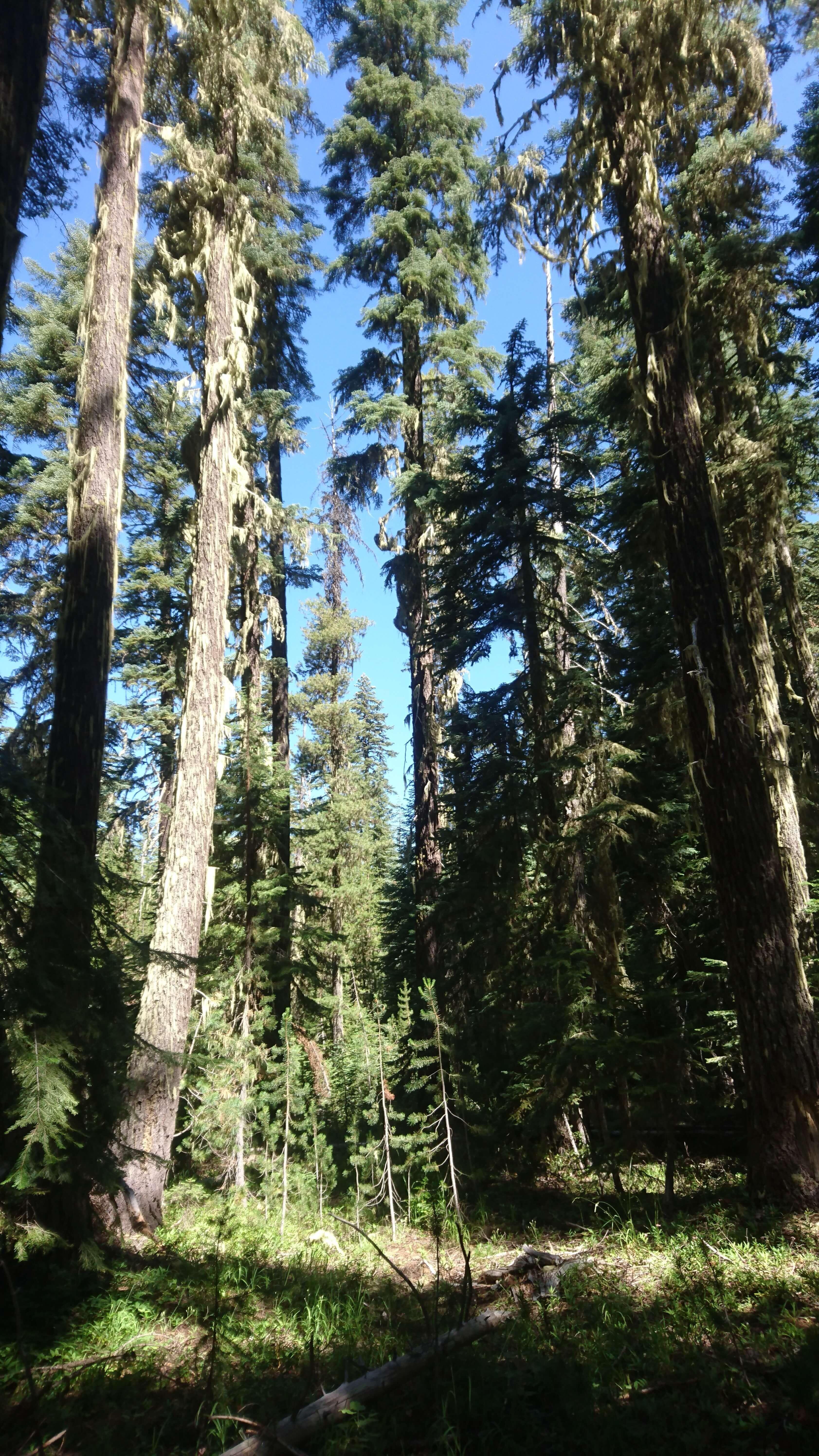 En pente douce dans la forêt