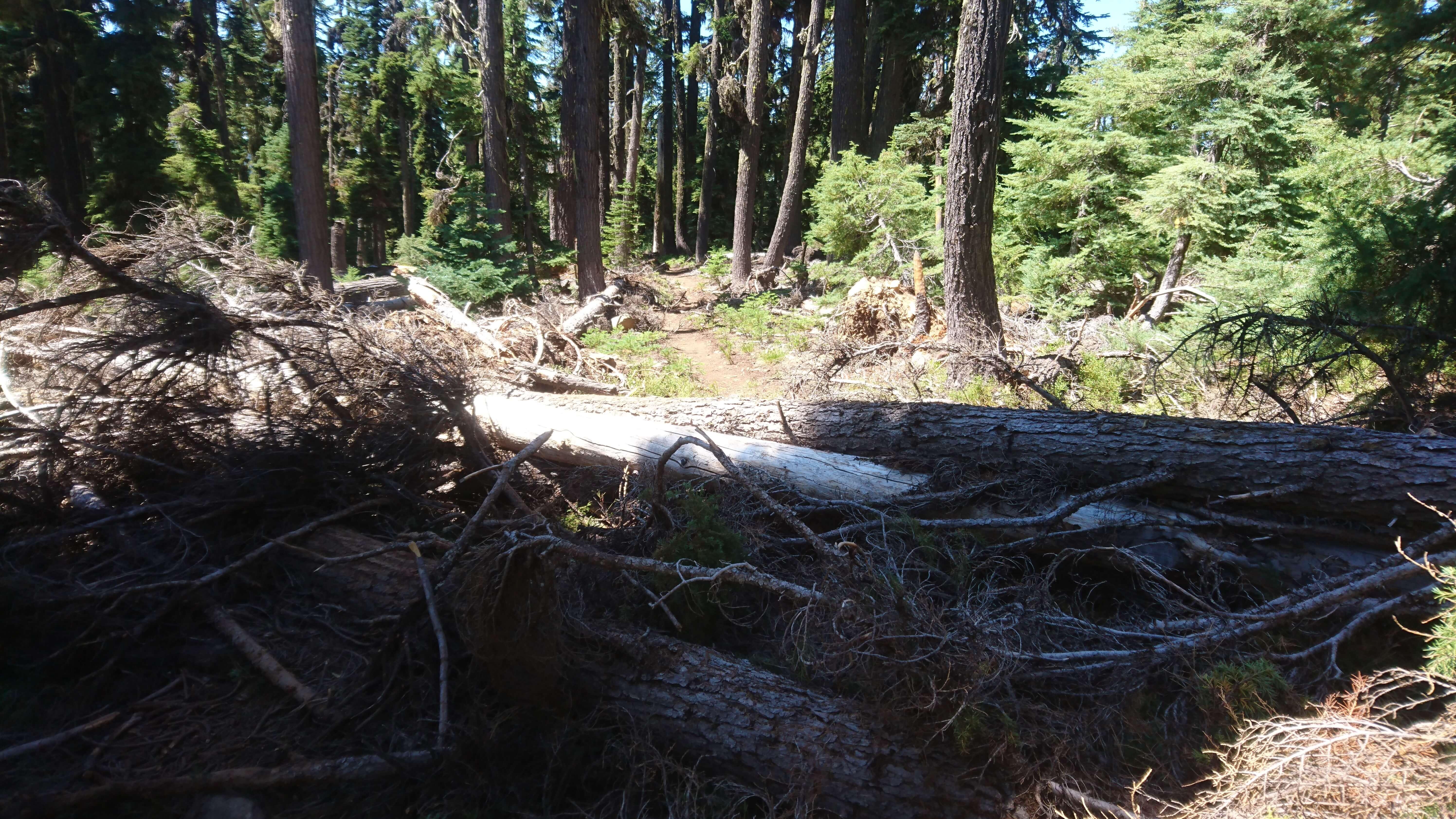 Les troncs sur le chemin, une vrai plaie ! et les moustiques qui attendent tranquillement :-)