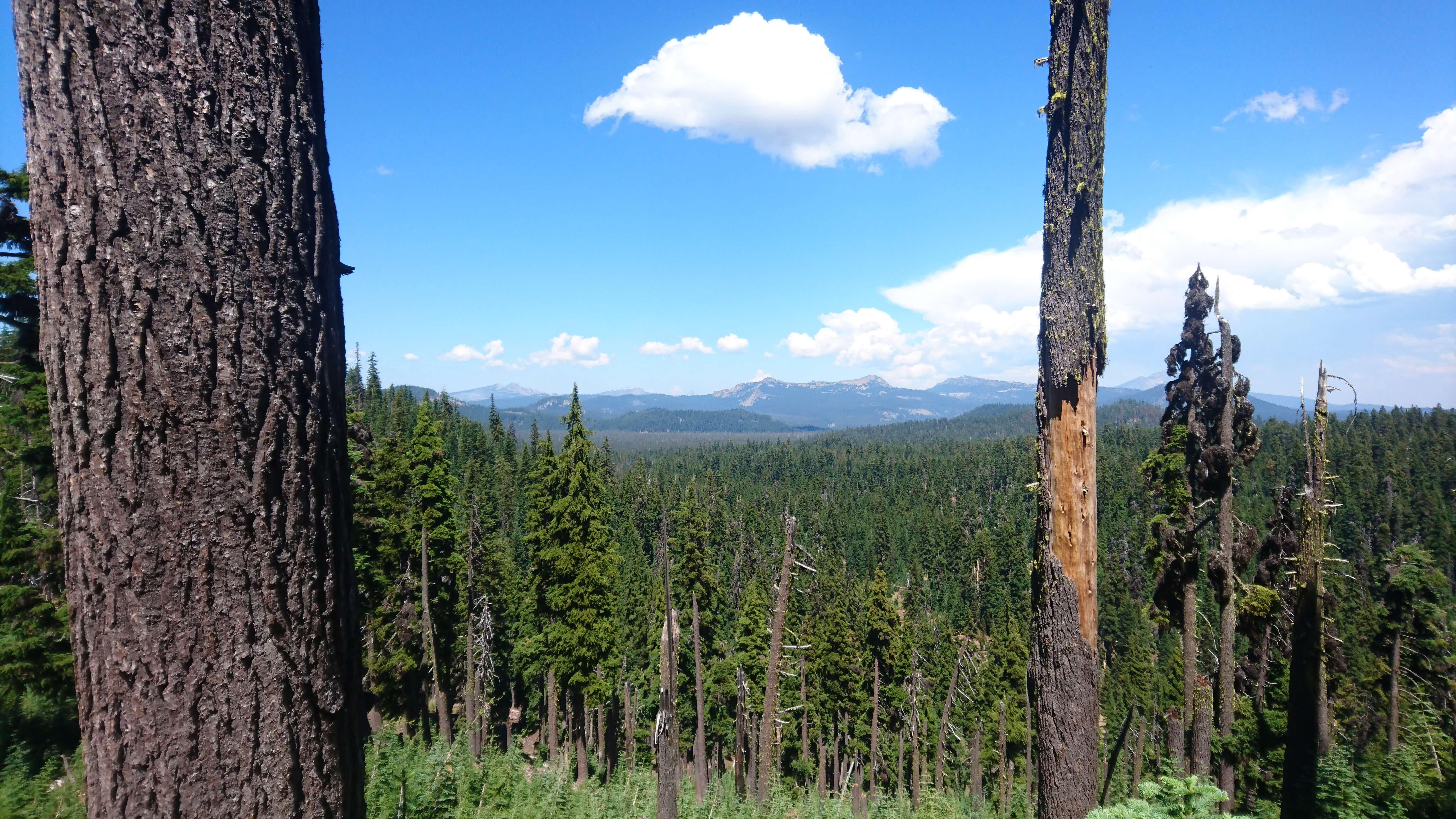Je me rapproche de Crater Lake à travers les forêts