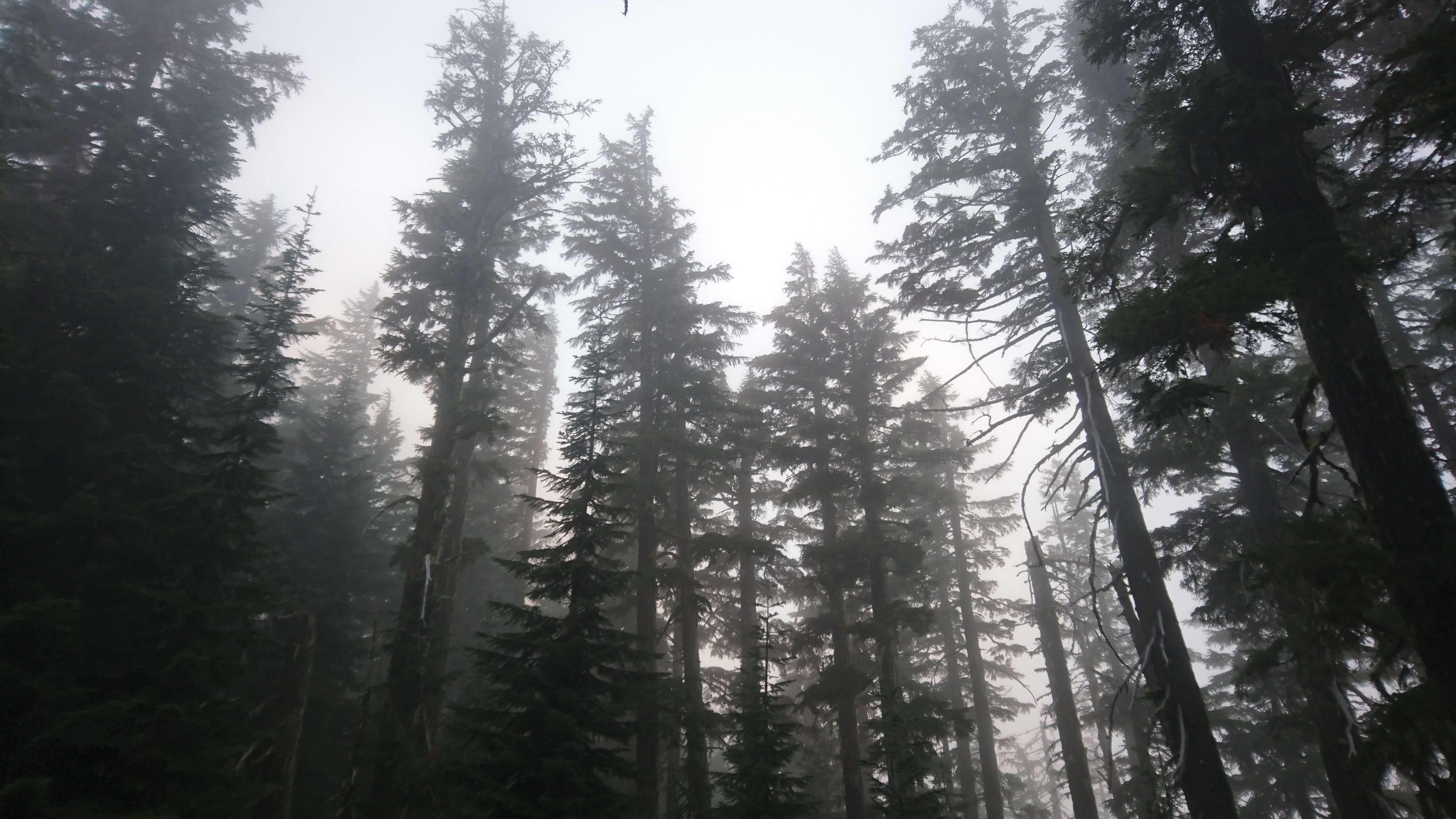 La brume matinale se dissipe déjà