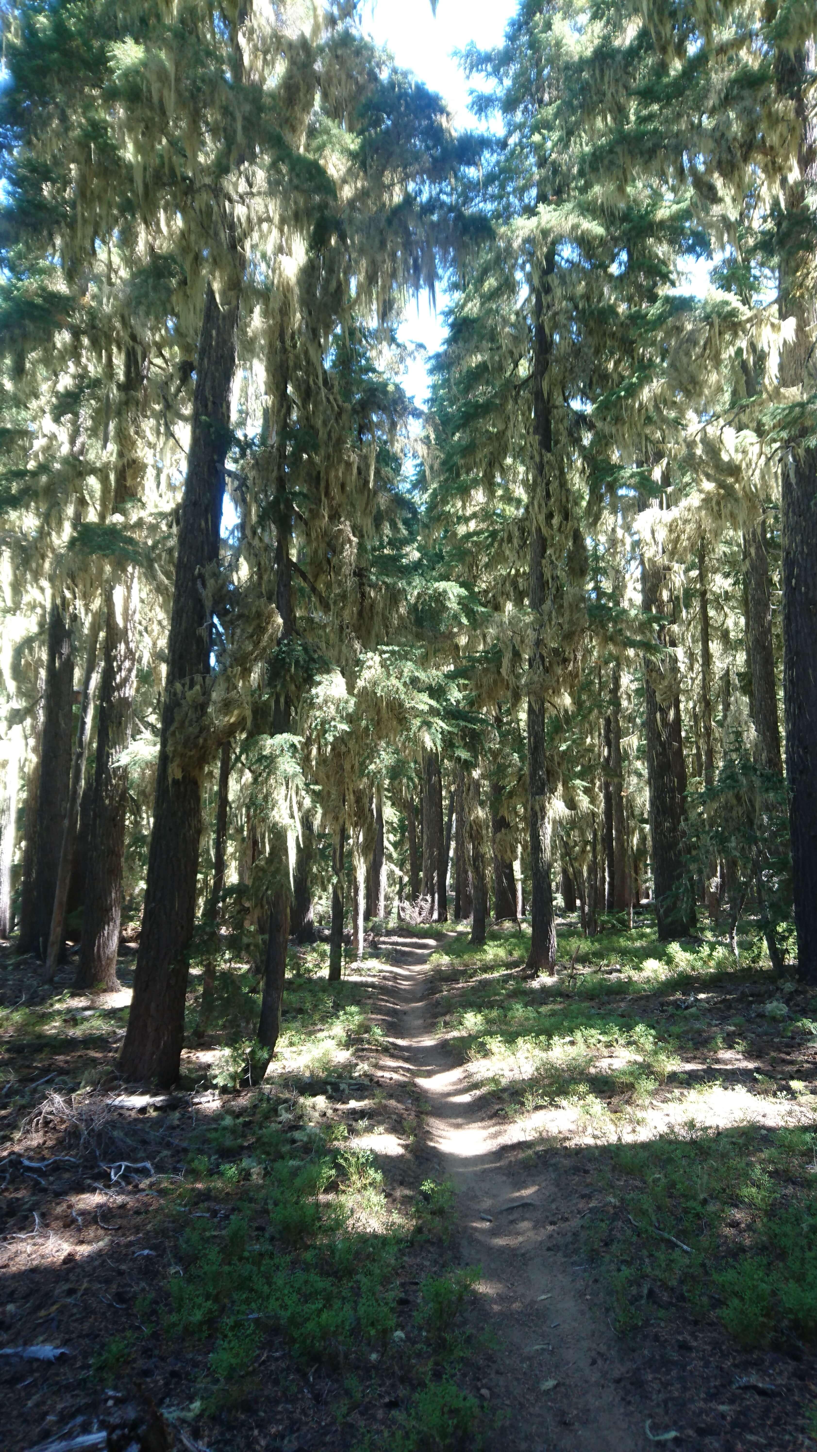 La forêt, omniprésente dans le sud de l'Oregon