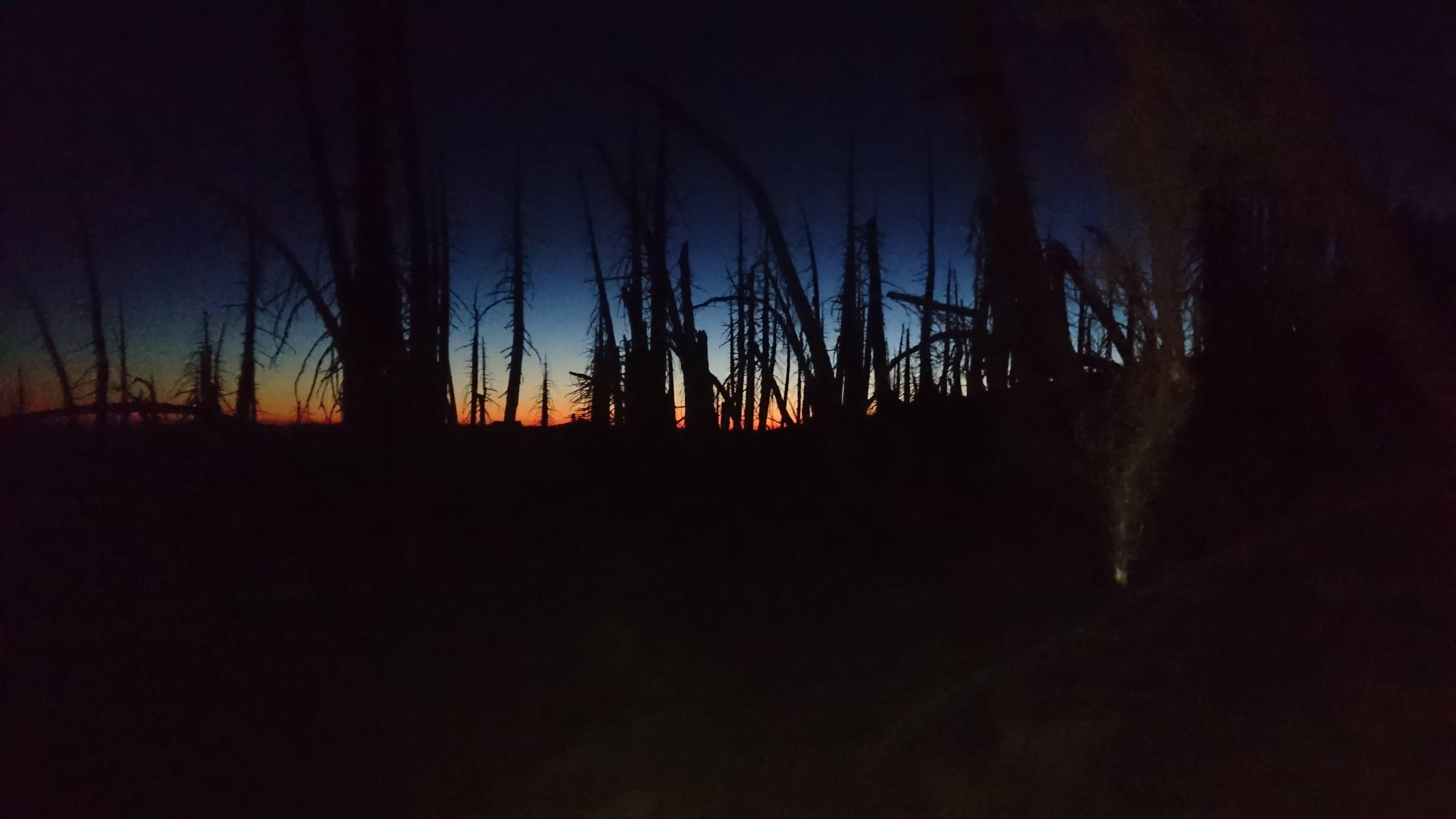 Dernières lueurs du jour à travers la forêt