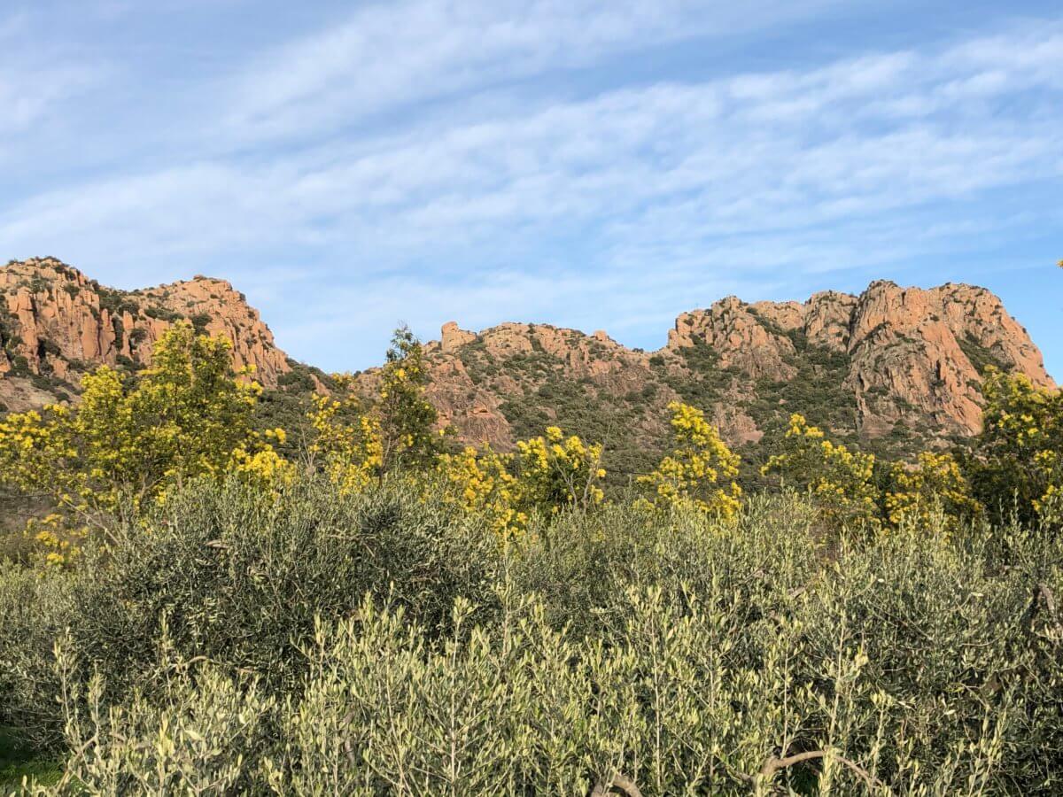 Balade sur le Rocher de Roquebrune